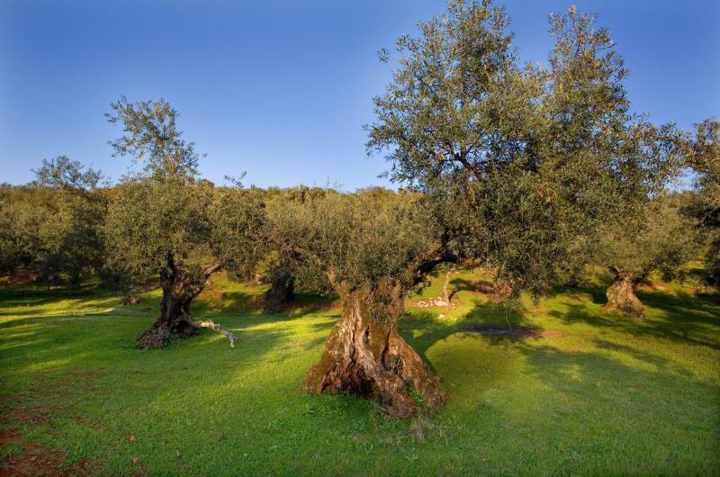 זכרון יעקב והסביבה